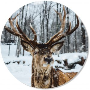 Muurcirkel Hert winter